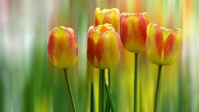 20 images de fleurs #4