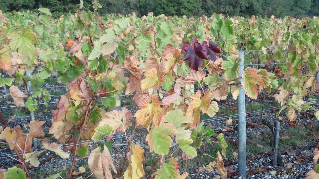 La feuille de vigne emportée...