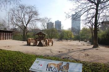 zoo cologne d50 2012 154