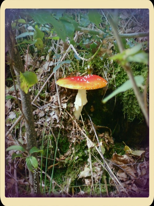 #Photos #Champignons