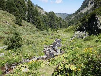Au bord du ruisseau des Carboneres