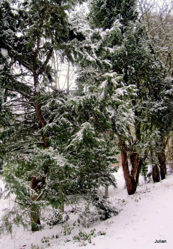 y03 - neige