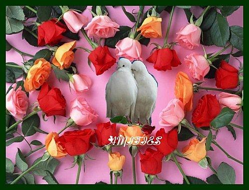 2roses-et-pigeon--2-.jpg