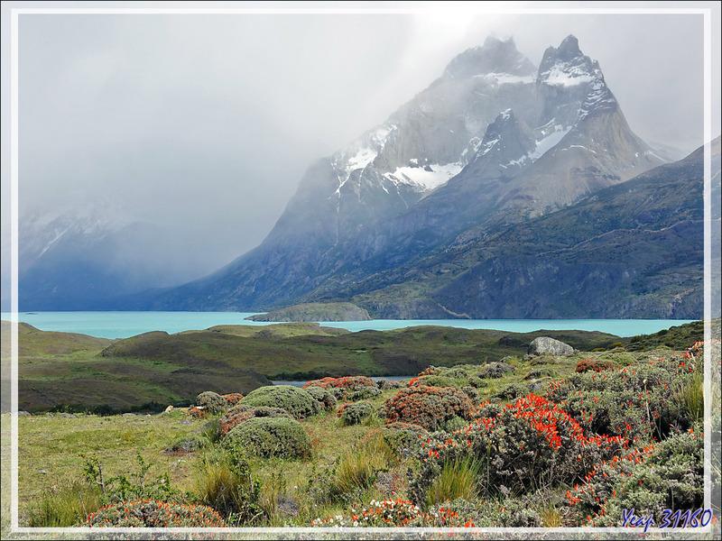 Panorama sur la petite Laguna Larga, le grand Lago Nordenskjöld et les Cuernos Del Paine - Parque Torres del Paine - Patagonie - Chili