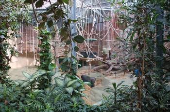 zoo cologne d50 2012 118