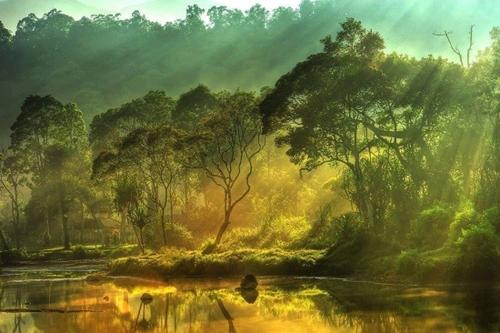 Aux arbres - Victor Hugo