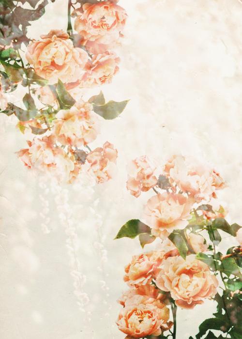 [cerise+] Flowers - Signature complète JoWh4x6ro7KunPrzVJSkx_dhNsY
