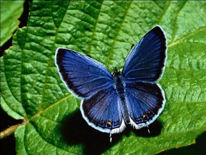 de très beaux papillons