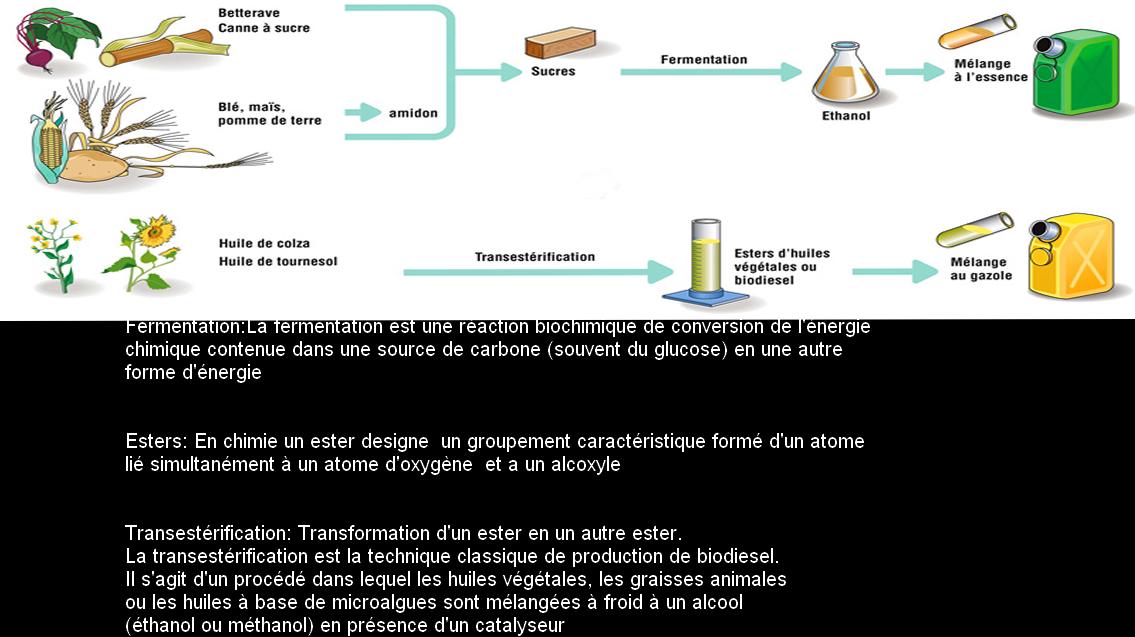 huile vegetale source energie