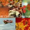 couleurs_d_automne.png