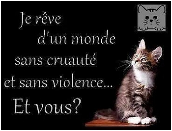 Chats ...Images.