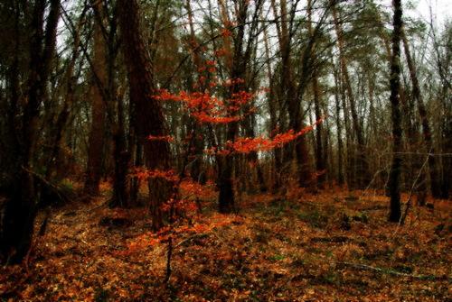 Un automne persistant pour un hiver orange (photo avec effets spéciaux)