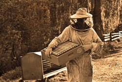 Working as a beekeeper