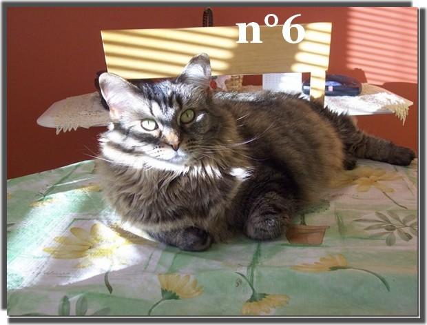 Tous les participants du concours du plus beau chat 2015