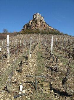 les vignes prés du château ( fiction )