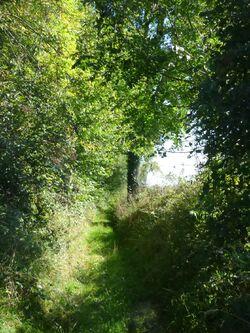 Le Chemin des Houziaux