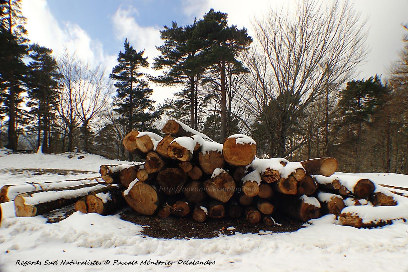 Du bois sous la neige