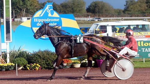 Hippodrome de la Baie Yffiniac - Réunion du 6 novembre 2016