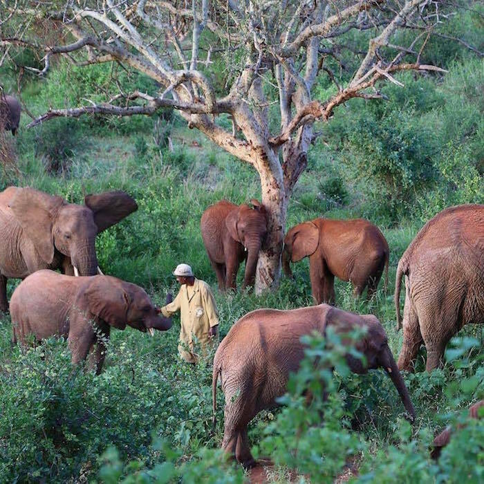 Crédit photo : The David Sheldrick Wildlife Trust / Instagram