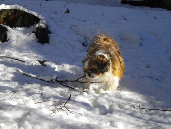 Samedi la neige...