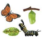 Figurine de Simulation du Cycle de vie d'un papillon, Figurine d'insecte,  jouet scientifique et éducatif | AliExpress