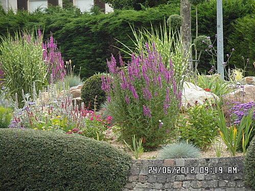 arbre-papillons--rond-point-et-herbe-003.JPG