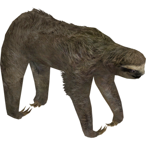 File:Three-toed Sloth (Aurora Designs) 2.png