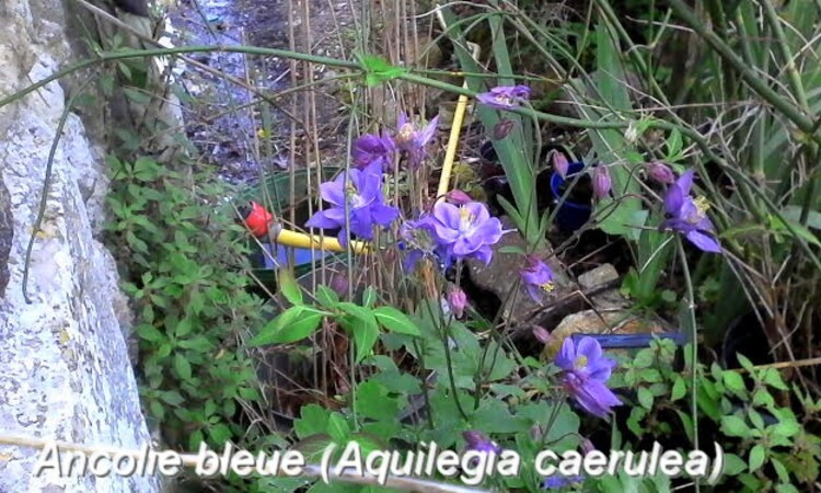 petit coins fleuris dans mon jardin ,reconnaissance des végétaux