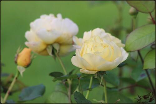 Les jardins d'Aywiers, un samedi d'octobre 2015 (2)