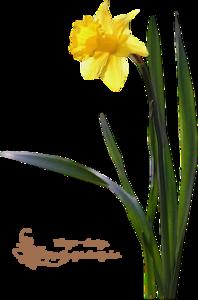 Virágok3 .png tubek