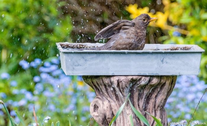Le Vrai-Faux Des Oiseaux Par Catherine Delvaux - Du Magazine Détente jardin
