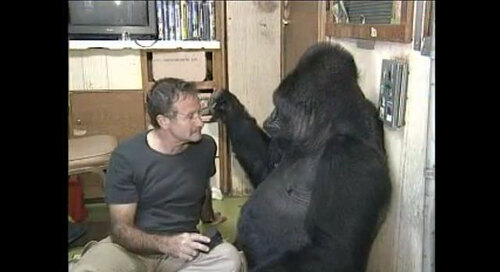 Fantastique video : robin williams avec le gorilla Koko