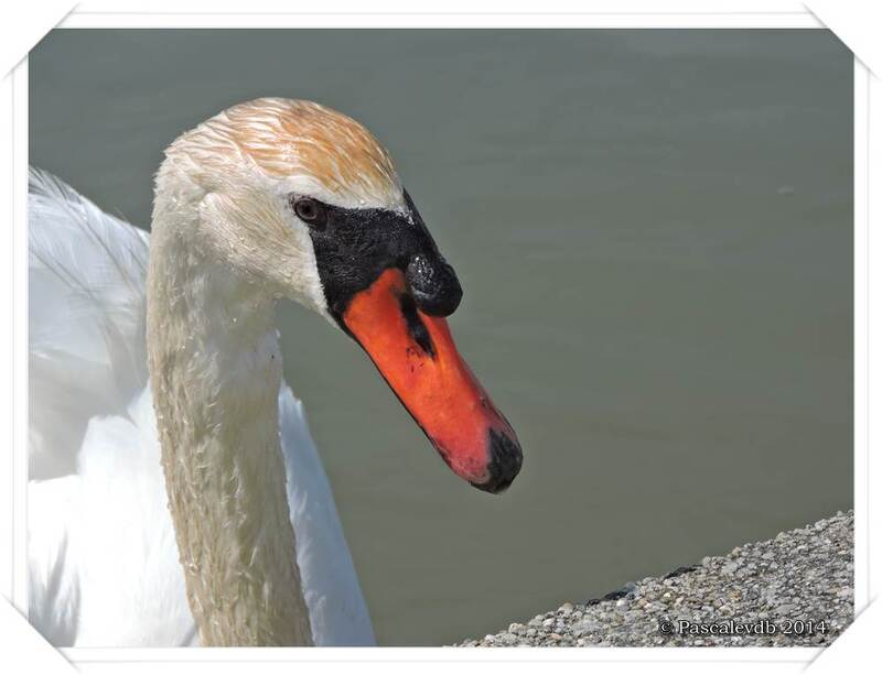 Réserve ornithologique du Teich - 5/10