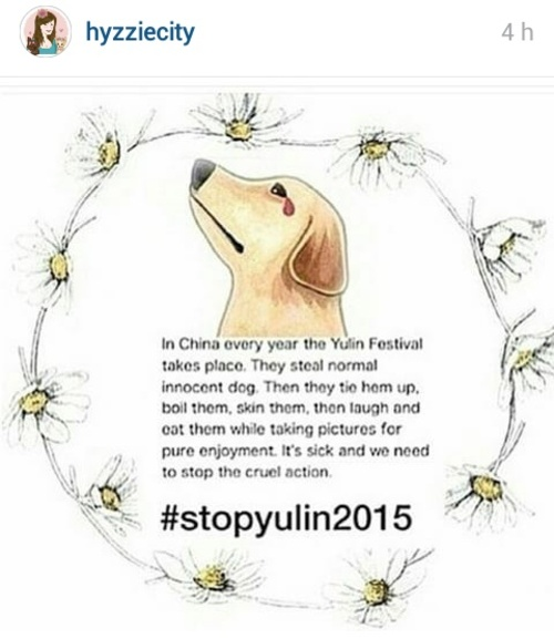FAVORIS | Instagram Juin 2015 - Animaux