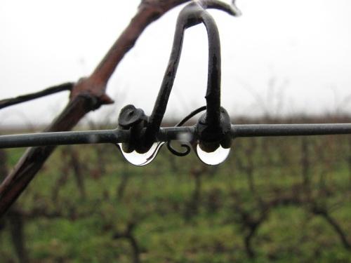 ... chouette, il pleut...!