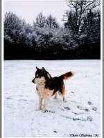 Laska (2,5 ans)
