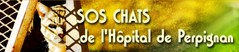 sos-chats-hopital-perpignan