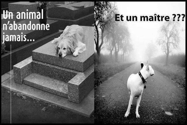Un chien n'abandonne  jamais
