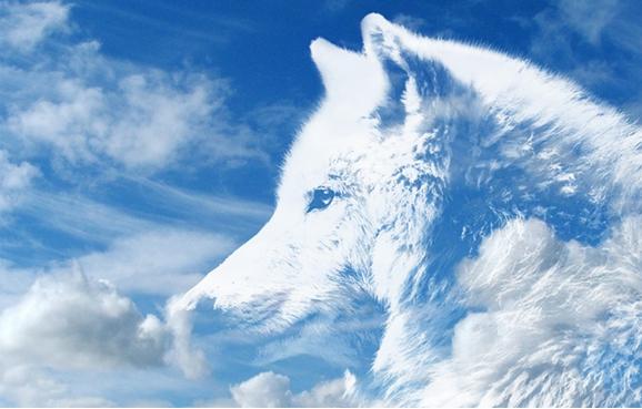 ☯ Le loup blanc