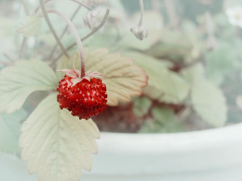 Un goût de fraise