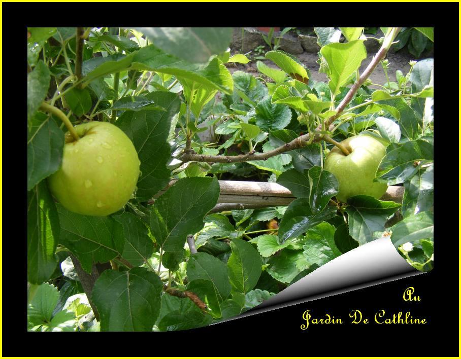Jardiner avec la lune du 21 au 31 octobre