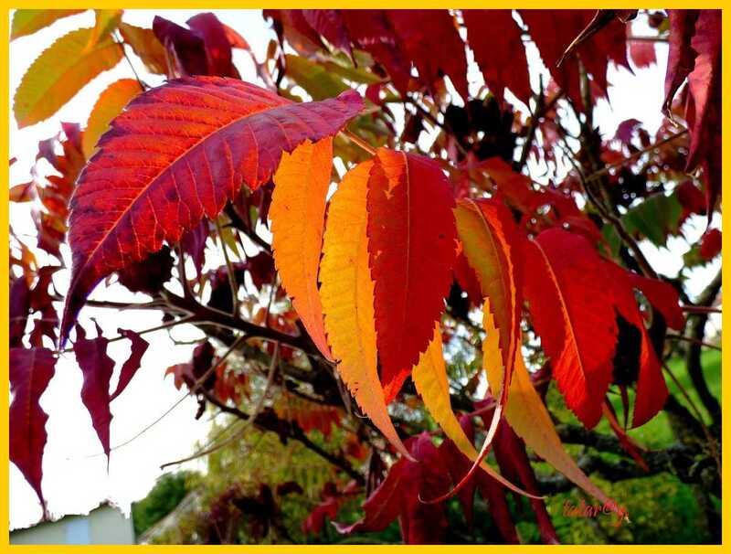 L'automne.....
