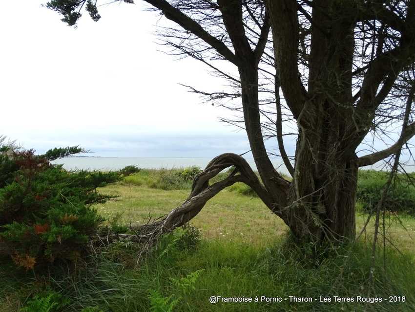 Sortie Nature aux Terres rouges à Tharon plage