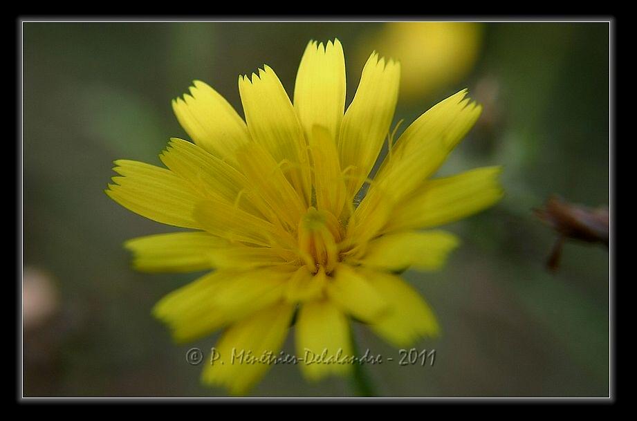 Encore et toujours des fleurs...