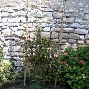 Une échelle en bambou pour faire grimper les plantes