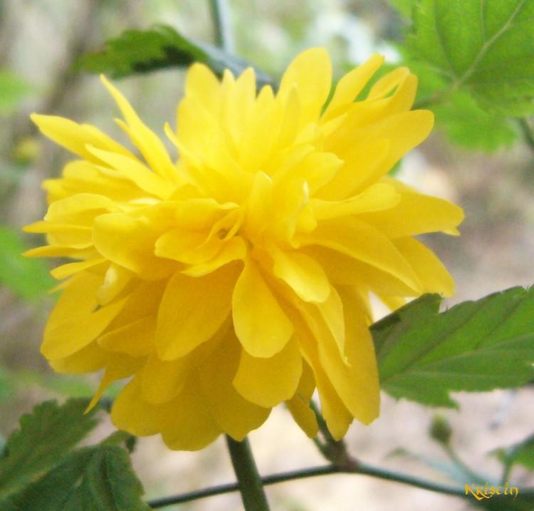 Le jaune du jardin