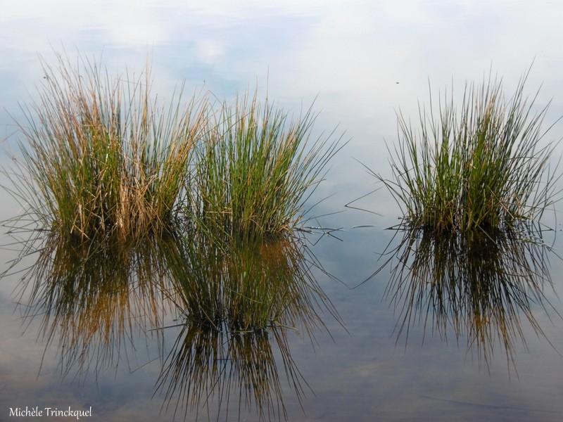 """Une nouvelle balade vers """"mon"""" Lac, le 13 janvier (suite)..."""