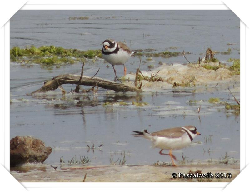 Symphonie printanière à la réserve ornithologique du Teich - 5/20