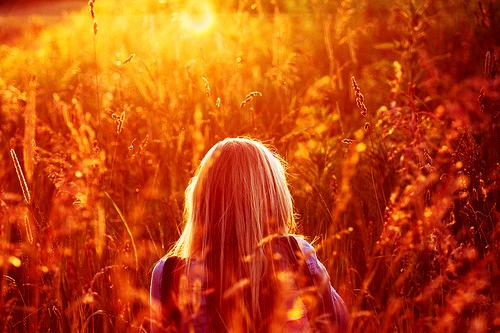 Soleil sur les champs