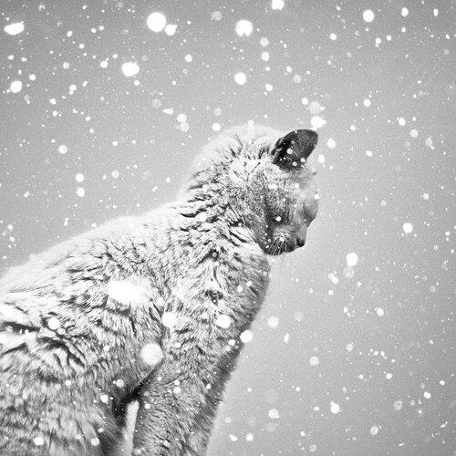 20 - La beauté du chat